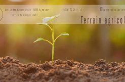 TERRAIN AGRICOLE 2 site